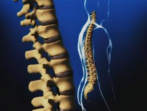 Обзор проблематики профилактики профессиональных заболеваний опорно-двигательного аппарата